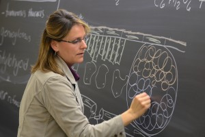 An LVC science professor creates a diagram on the board